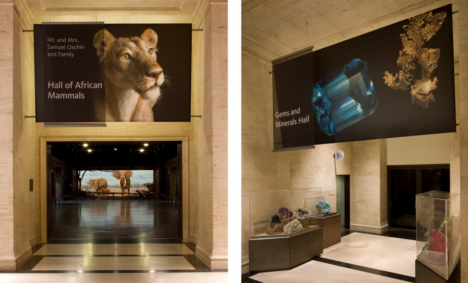 Natural History Museum of Los Angeles: Revitalizing the Visitor Experience image 2